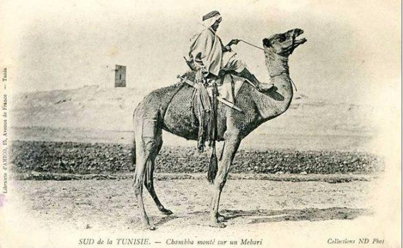 mehri - chaamba - tunisie