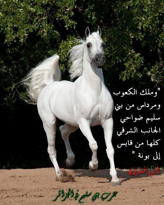 بنو سليم الجزائر
