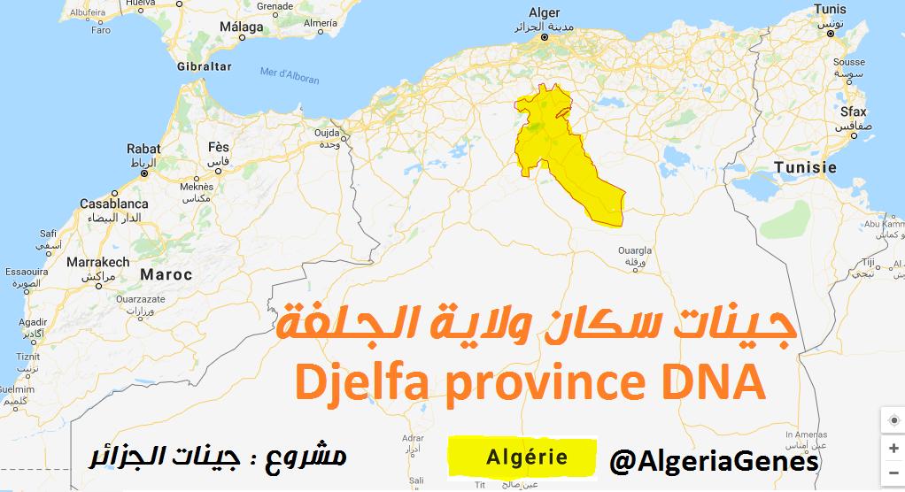 جينات سكان الجلفة – Djelfa provinceDNA